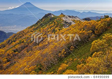 Mt. Fuji and yellow leaves of Betula ermanii in the Southern Alps, Phoenix Sanzan, and Kannondake 64490899