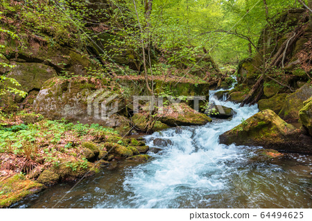 rapid water flow among the forest. trees in fresh 64494625