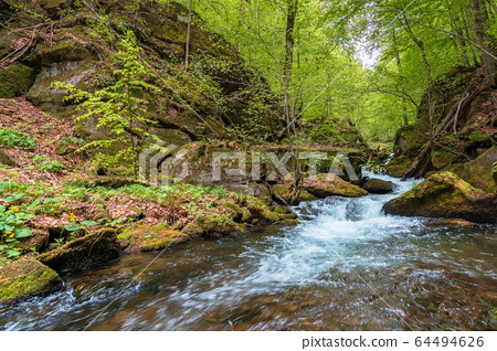 rapid water flow among the forest. trees in fresh 64494626