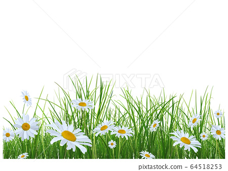 Grass with Daisies Flowers 64518253