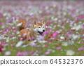 Flower field walk dog 64532376