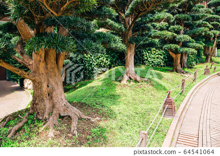 Nan Lian garden green tree road in Hong Kong 64541064