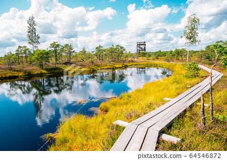 Kemeri National Park Bog trail in Latvia 64546872