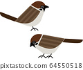 Bird bird sparrow 64550518