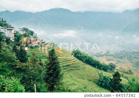 Muong Hoa Valley Terraced rice field in Sapa, Vietnam 64557392