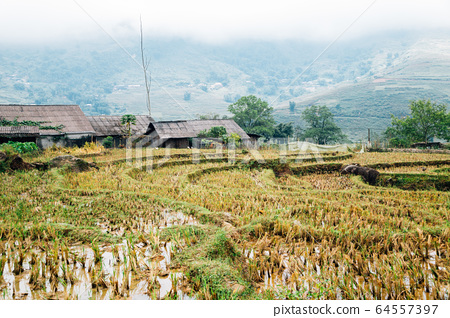 Terraced rice field and traditional house in Lao Chai, Sapa, Vietnam 64557397