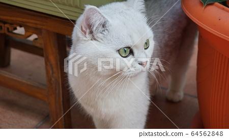 猫与花园 64562848