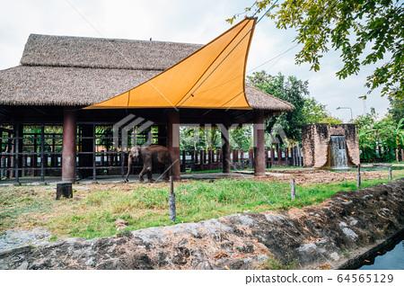 Elephant at Dusit Zoo in Bangkok, Thailand 64565129