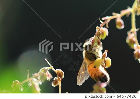 꿀벌과 작은 꽃 64577420