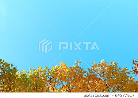 아름다운 가을 단풍과 하늘 64577917