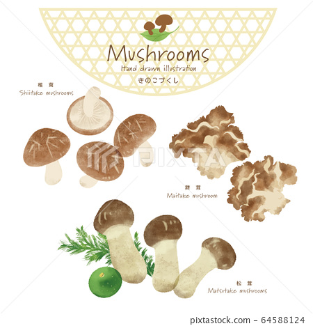 Mushroom illustration / hand-painted style / autumn taste 64588124
