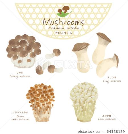 蘑菇插畫/手繪風格/秋天的味道 64588129