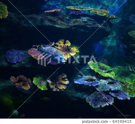 Marine life fish swimming underwater ocean 64589415