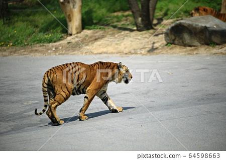 愛寶樂園動物園和野生動物園 64598663