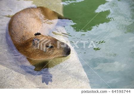 에버랜드동물원.사파리 64598744