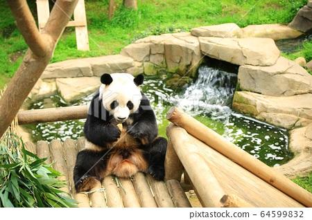 動物園,愛寶樂園 64599832