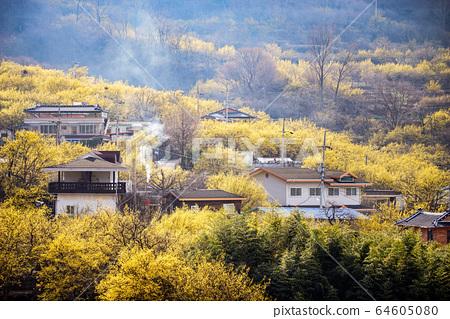 전라남도 구례군 산수유마을 풍경 64605080