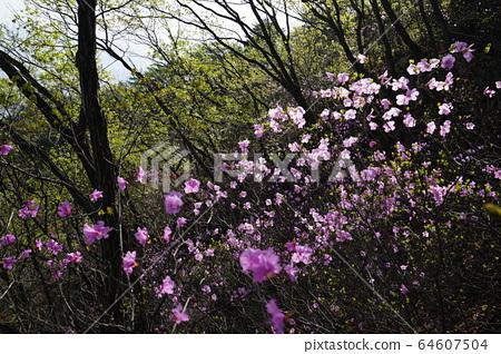 북한산.국립공원.봄이  64607504