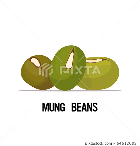 mung beans organic healthy vegetarian food on white background vector illustration 64612085