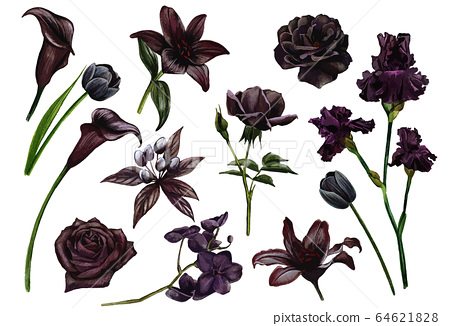Black and flowers set, watercolor hand drawn vector illustration 64621828