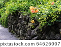 濟州島石牆 64626007