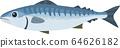 Mackerel Atlantic mackerel Norwegian mackerel vector illustration 64626182