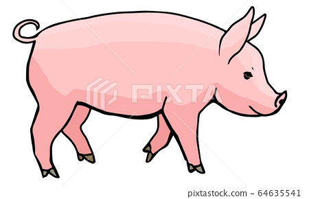 옆에서 본 돼지 전신 64635541