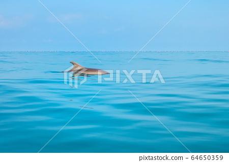 Dolphins swimming around 64650359
