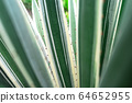 Abstract striped natural background. Nature tropical background. 64652955