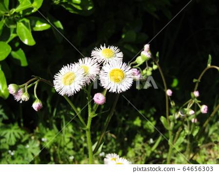 野花盛开在路边 64656303
