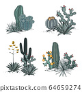 Decorative compositions composed of groups of cacti, blooming prickly pear, agaves, and yucca. Vector set illustration isolated on white background. 64659274