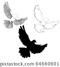 set of three dove icon, black and white 64660601