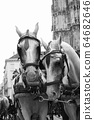 Horses and carriage on stefansplatz in Vienna 64682646