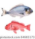 Beautiful stock illustration with watercolor hand drawn sea bass and dorado fish. 64683173