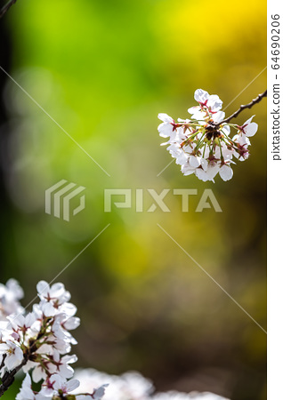 多彩的春天 64690206
