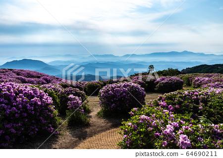 杜鵑花和山綠 64690211