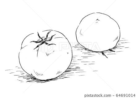 Tomato 64691014