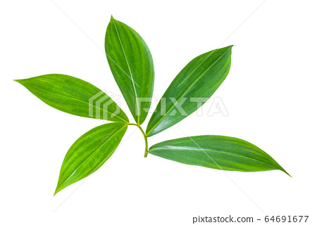 leaves  isolated on a white background 64691677