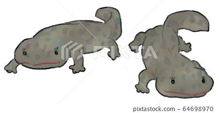 Illustration of cute giant salamander gray color 64698970