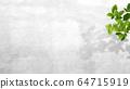 배경 - 벽 - 관엽 식물 64715919