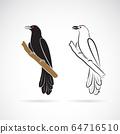 Asian koel bird(Eudynamys scolopaceus). Birds. 64716510