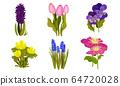 Spring Flowers Growing in Garden on Flowerbeds Vector Set 64720028