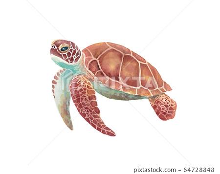 海龜水彩插圖,跟踪矢量 64728848