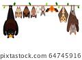 各種類型的蝙蝠排成一行 64745916
