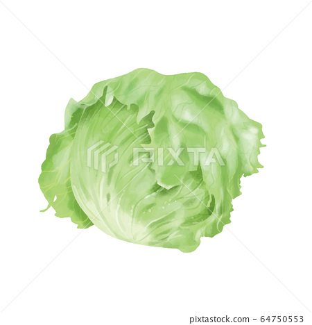 整個生菜水彩風格 64750553