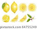 各种柠檬水彩画集 64755249