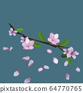 Pink blossom of sakura - Japanese cherry tree branch with flying petals isolated on blue background. Vector illustration 64770765