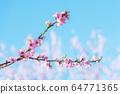 Pink peach flowers on twigs on blue sky background 64771365