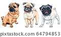 vector set cute dog pug breed 64794853