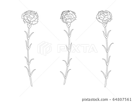 Carnation Floral Drawing Black And White Stock Illustration 64807561 Pixta